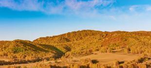 董卓平:坝上秋景,草原,牛羊和马群